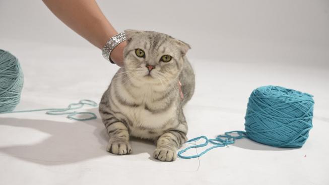 Klubko vlny může kočku i zabít