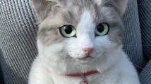 Kočičí batoh