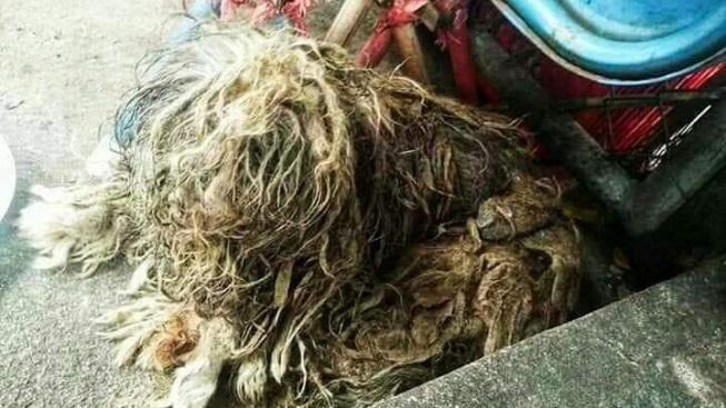 Neuvěřitelná proměna: Z koule zacuchaných chlupů vykoukla psí dáma
