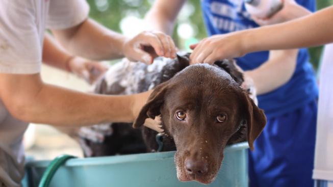 Můžete psa koupat v lidském šamponu?