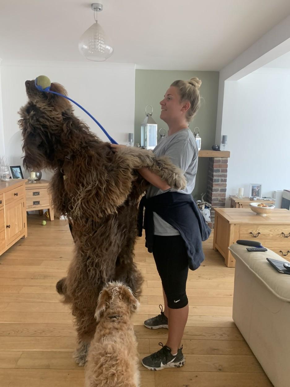 Psí Chewbacca