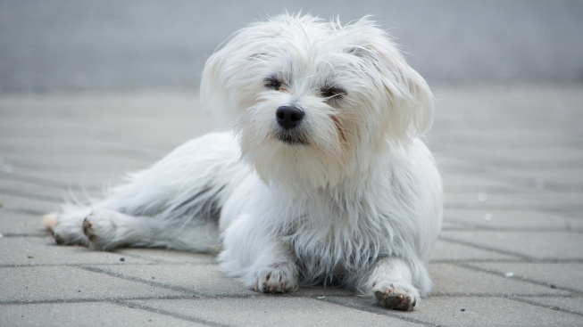 dog-1481270_1920