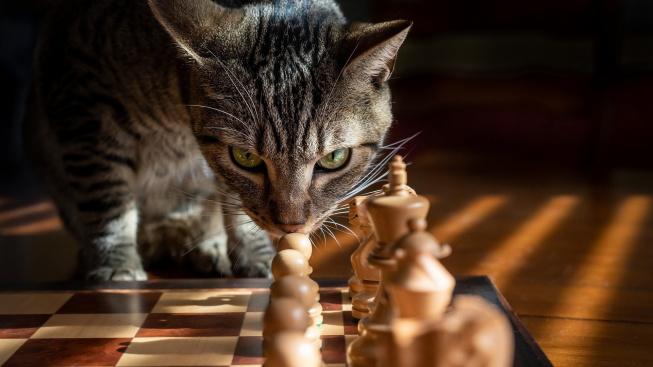 Šest projevů kočičího chování pohledem vědy