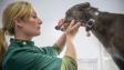 Chudokrevnost u psů: Když se z únavy stává hrozba na životě