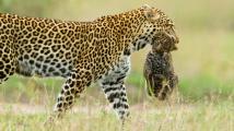 Zvířecí mámy