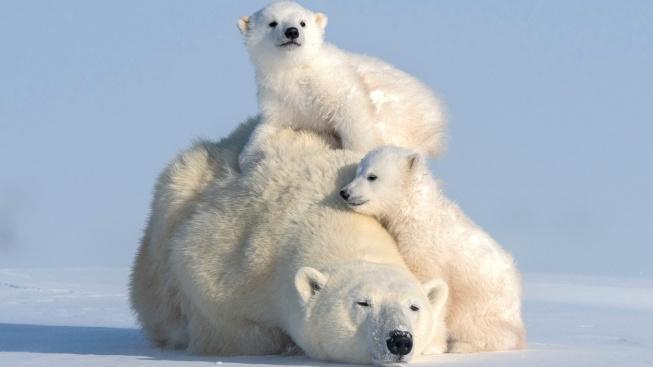 Den matek slaví i zvířecí maminky