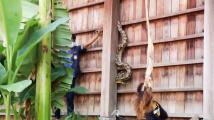 Odvážná lovkyně hadů