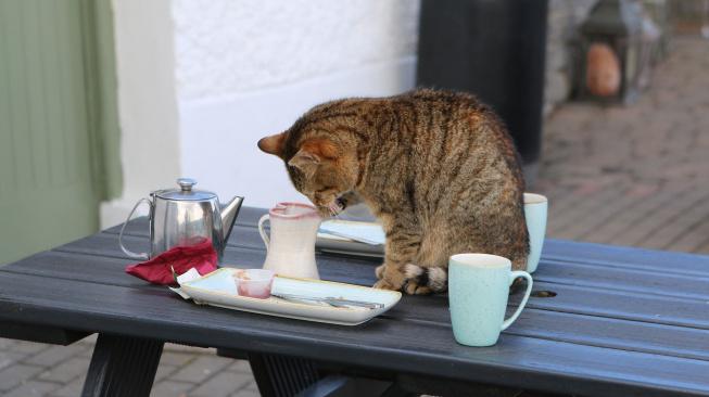 Proč kočky shazují věcí a co s tím?