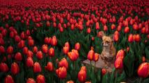 Psi v květinách