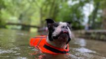 Slepý pes stále trénuje agility