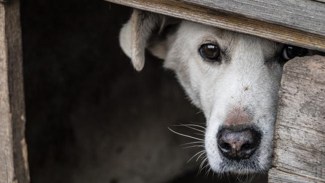 Jaké jsou nejčastější psí fobie?