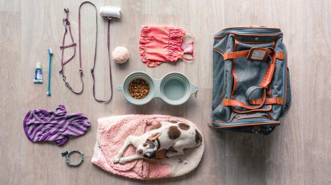 Online nákup pro mazlíčka – co se vyplatí koupit v e-shopu a co si raději vyzkoušet v obchodě?