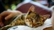 Vědci určili pět typů vztahů člověka s kočkou. Jaký je ten váš?