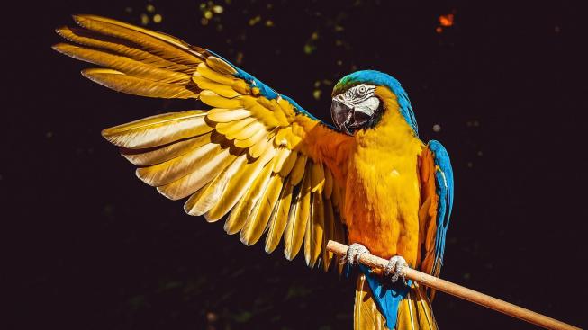 I papoušky mohou napadnout vši