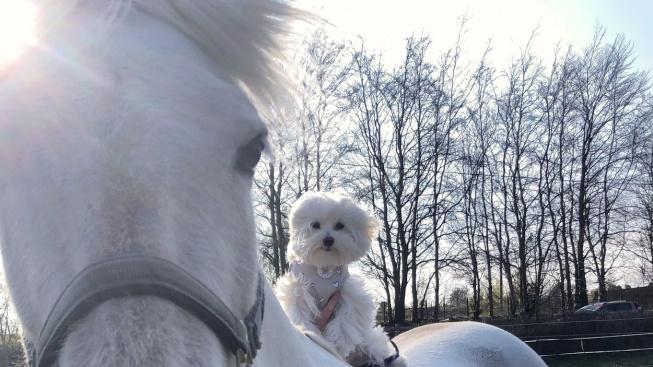 Psí jezdec: Neobvyklé přátelství koně a maltézáčka