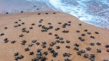 Útěk želvích mláďat