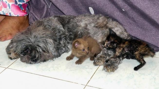 Fenka adoptovala třídenní koťata. Jejich mámu snědl had