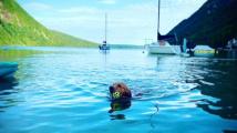 Psí delfín