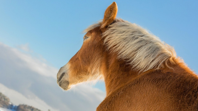 Nejvyšší kůň na světě měřil přes dva metry. Zemřel ve 20 letech