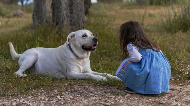 Co dělat, když pes špatně reaguje na příchod miminka
