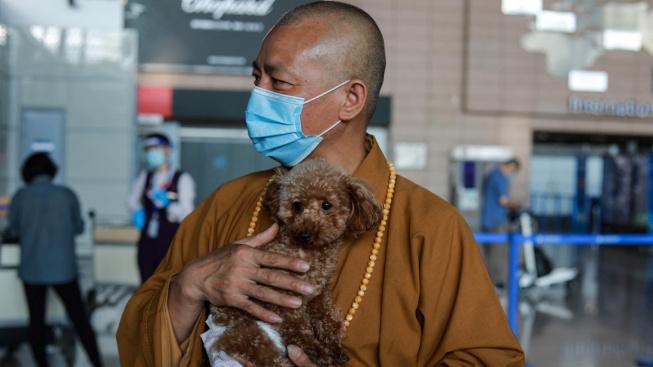 Buddhistický mnich zachránil už osm tisíc opuštěných zvířat