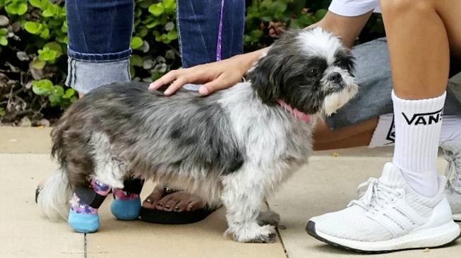Detektiv bez nohy adoptoval psa s protézami tlapek