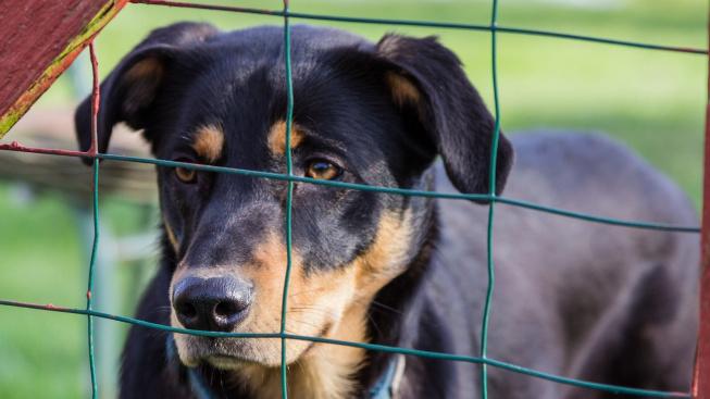 Nové psy v útulcích trápí nespavost, tvrdí studie
