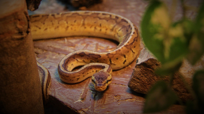 Co dělat, když vás uštkne váš hadí mazlíček?