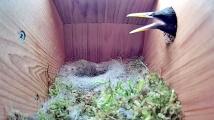 Hnízdo sýkorek