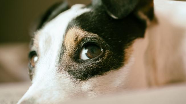 Psi poznají, když jim lidé lžou, říká studie