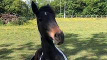 Líný kůň