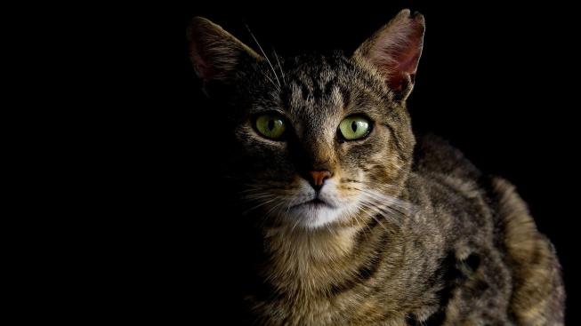 Jak korigovat kočičí noční aktivity