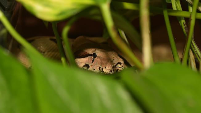 Proč se hadi někdy v teráriu zahrabávají
