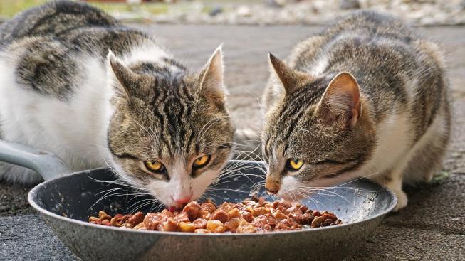 Proč vědce překvapilo, že se kočky rády nechají obsluhovat