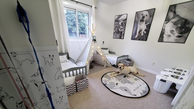 Psi překáželi v posteli, tak dostali vlastní pokoj