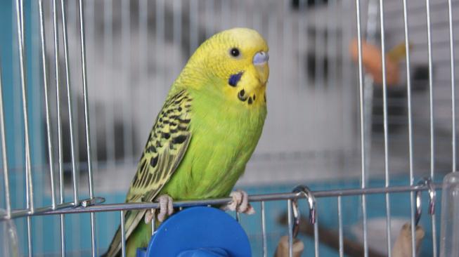 Jak vytvořit bezpečný domov pro papouška