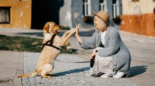 Psi dokážou rozpoznat, zda člověk něco nemůže, nebo jen nechce
