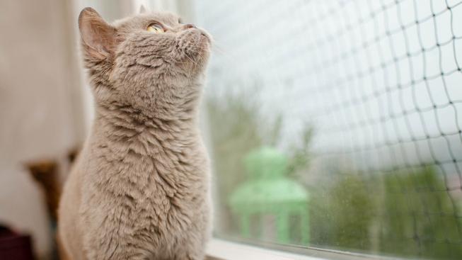 Co s kočkou utěkářkou?