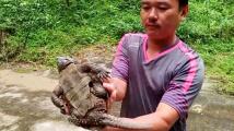 Zachráněná želva