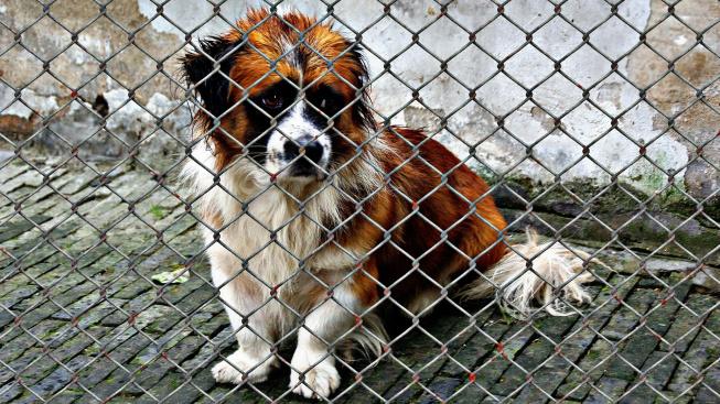 Během karantény byli psi lidem dobří, teď se jich zbavují