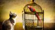 Můžete si pořídit ptačího mazlíčka, když už máte doma kočku?