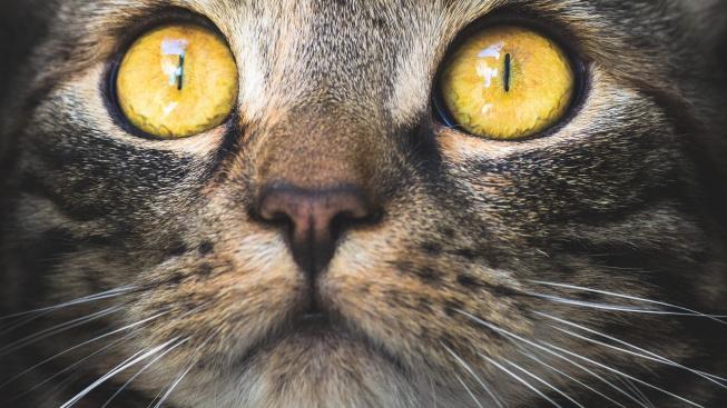 K čemu jsou kočičí vousky