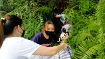 Opičí únosce