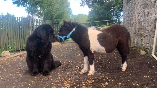 Kůň a pes. Kdo je v tomhle přátelství větší?