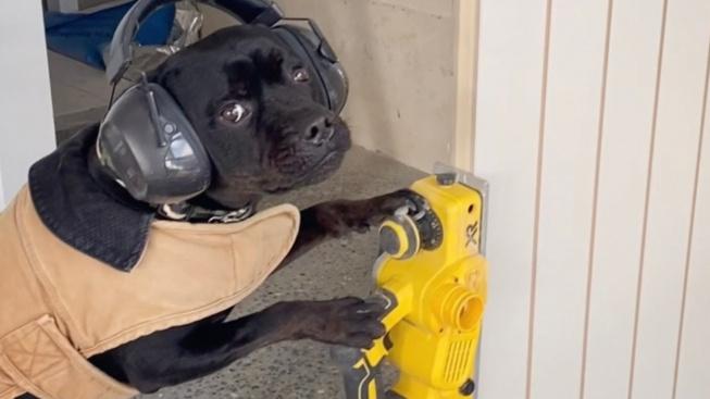 """Potřebujete opravu domu? Zavolejte """"stafíkovi"""" Brixovi"""