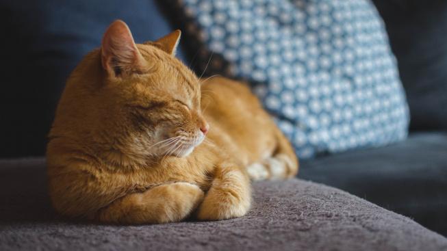 Jak číst v kočičích náladách I.: Pozitivní projevy