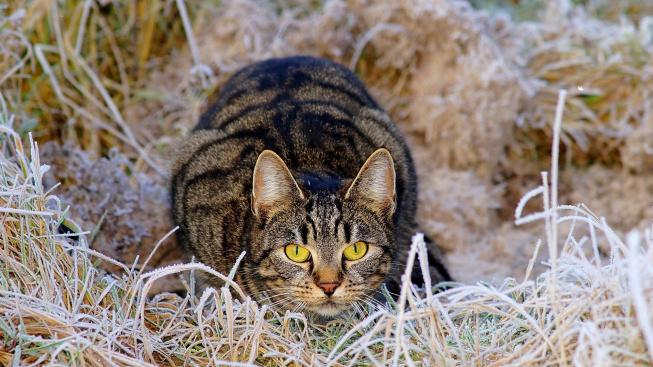 Mají kočky radši krmení, nebo lov? Odpověď prozradí jejich vousky