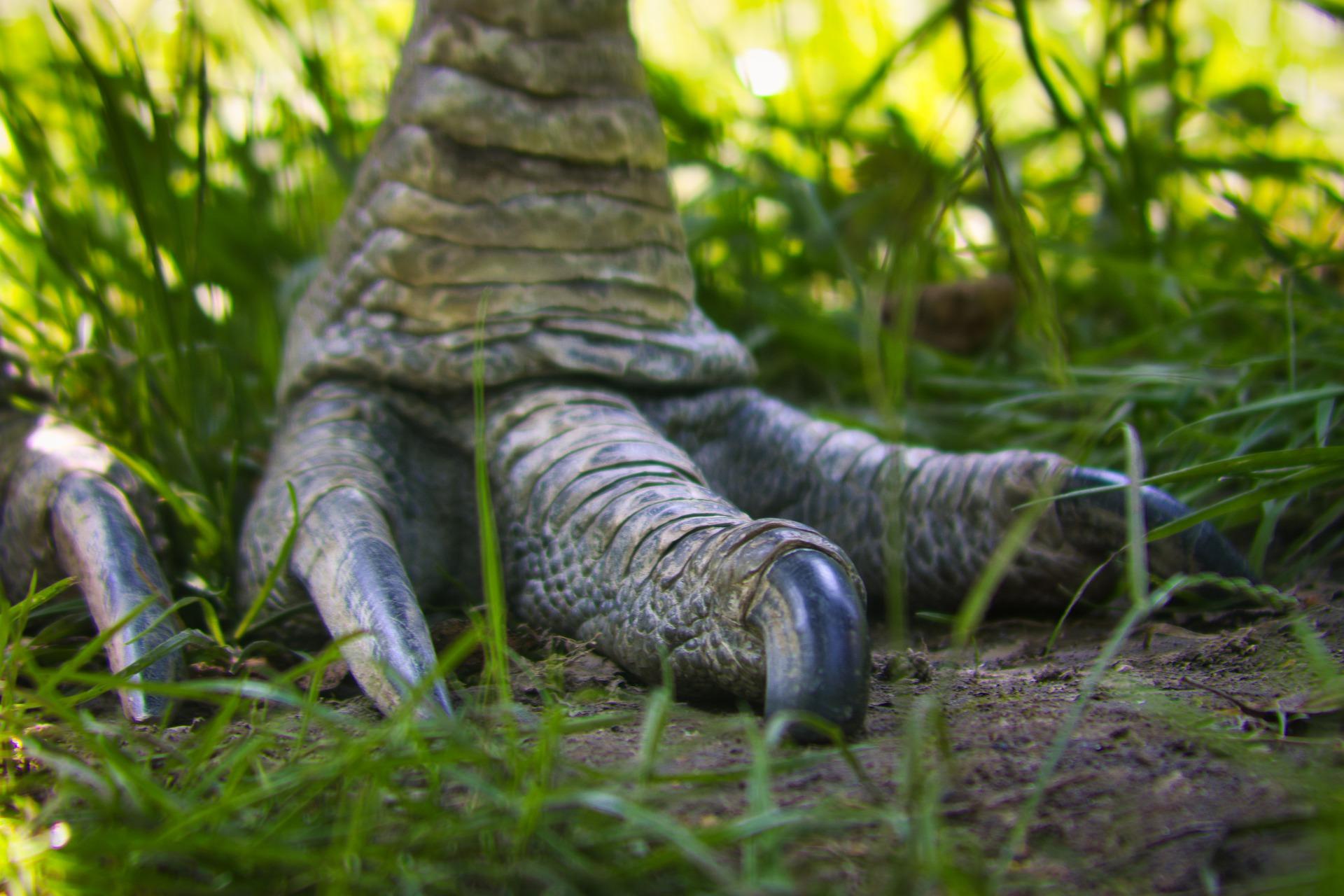 cassowary-feet-g89af8e006_1920