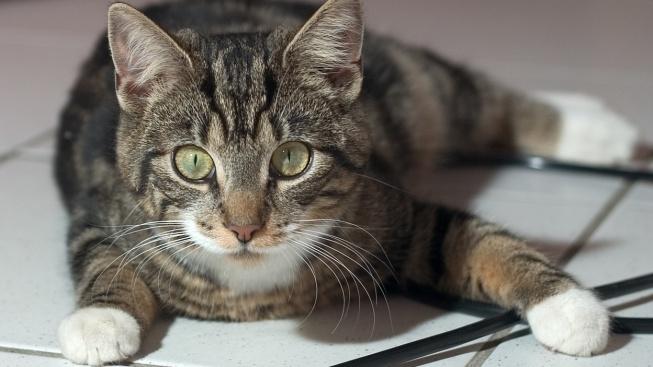 Jak pomoci kočce zasažené elektrickým proudem