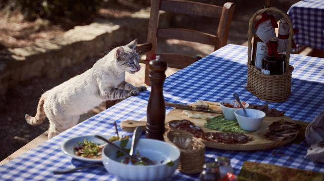 Jaké lidské jídlo můžeme nabídnout kočce?